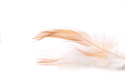 Feather on light background, close-up, selective focus and place for text